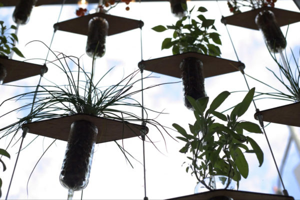 Plants in pots mounted on vertical wires